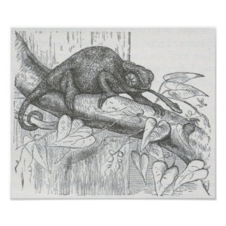James Johonnot - Chameleon Poster