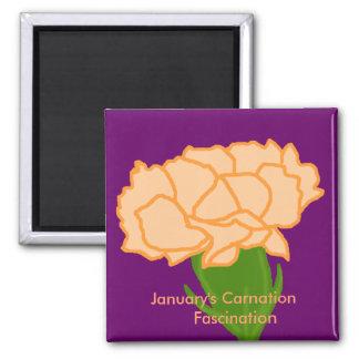 Jan carnation Fascination  magnet