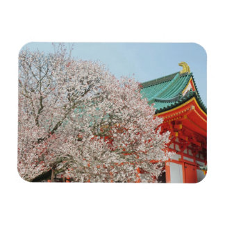 Japan, Kyoto. Cherry blossom of Shinto Rectangular Photo Magnet