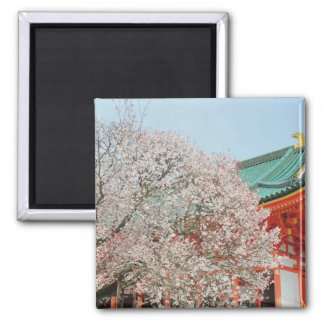 Japan, Kyoto. Cherry blossom of Shinto Square Magnet
