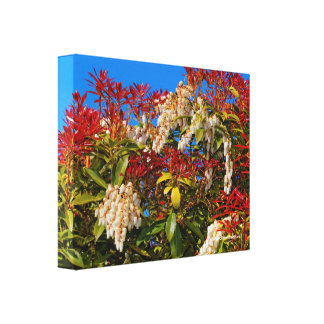 Japanese Andromeda Bonfire Canvas Print