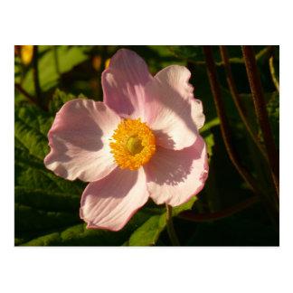 Japanese Anemone Flower Postcard