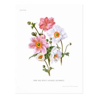Japanese Anemones Postcard