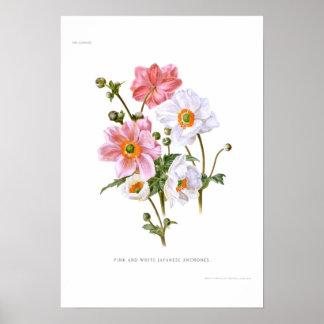 Japanese Anemones Print