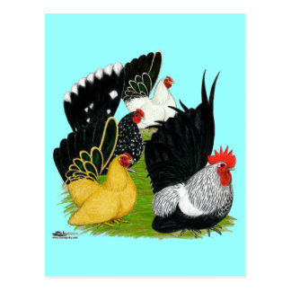 Japanese Bantam Quartet Postcard