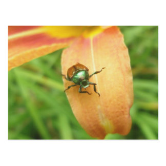 Japanese Beetle Postcard
