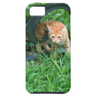 Japanese Cat 3 Case For The iPhone 5