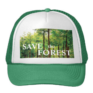 Japanese Cedar woods Cap