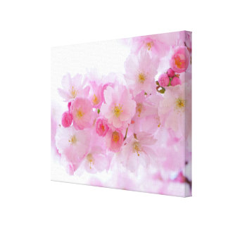 Japanese Cherry Blossom Canvas Print