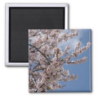 Japanese cherry blossom square magnet