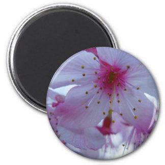 Japanese Cherry Blossom Refrigerator Magnet