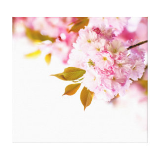 Japanese cherry in blossom stretched canvas print