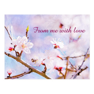 Japanese Cherry - Sakura In Bloom Postcard