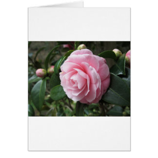 Japanese cultivar of pink Camellia japonica Greeting Card