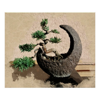 Japanese Evergreen Bonsai in Crescent Moon Planter Poster