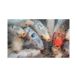 Japanese Koi Carp. Canvas Print