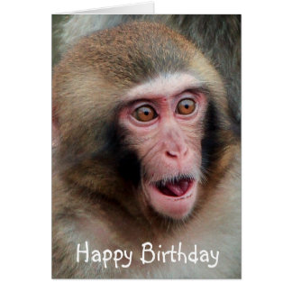 Japanese Macaque Monkey Birthday Card