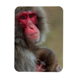 Japanese Macaque Monkeys Flexible Magnet