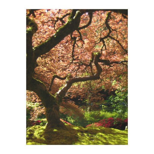 Japanese Maple Acer Palmatum Portland Garden Stretched Canvas Print