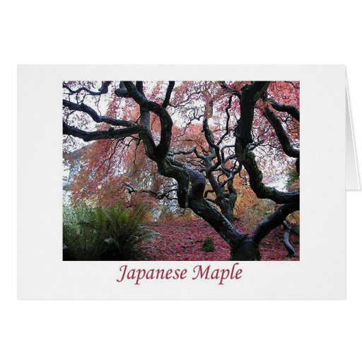 Japanese Maple Greeting Cards