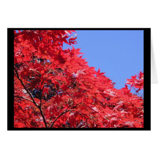 Japanese Maple Greeting Card