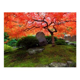 Japanese Maple in a Japanese Garden in Autumn Postcard
