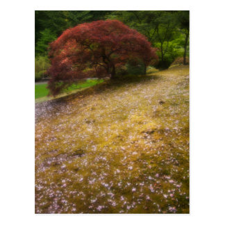 Japanese Maple in a Japanese Garden in Spring Postcard