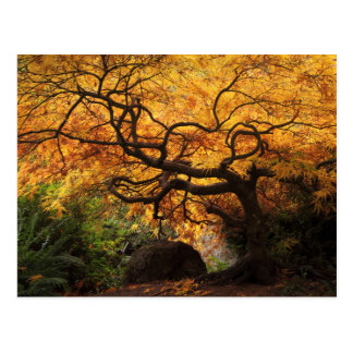Japanese Maple in a Japanese Garden in the Autumn Postcard