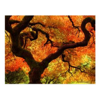 Japanese Maple in Autumn Postcard