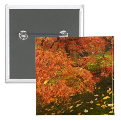 Japanese maple in fall color 2 buttons