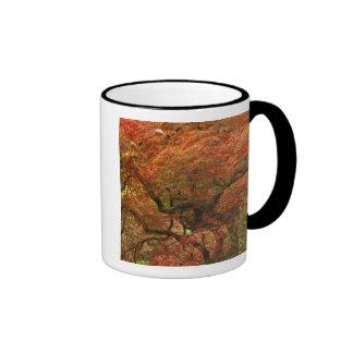 Japanese maple in fall color 4 coffee mug