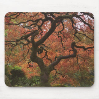 Japanese maple in fall color 5 mouse pads