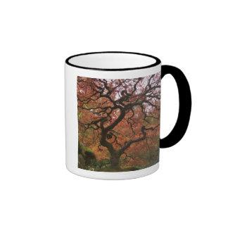 Japanese maple in fall color 5 mug
