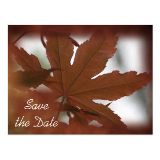 Japanese Maple Leaf Autumn Save the Date Postcard