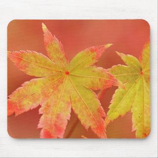 Japanese Maple Leaf Mouse Pad