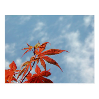 Japanese Maple Leaf Postcard