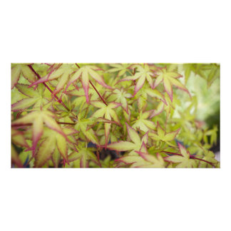 Japanese Maple Leaves Blank Card Custom Photo Card