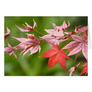 Japanese Maple Leaves Card