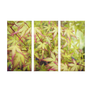 Japanese Maple Red Fringe Canvas Triptych Wall Art Stretched Canvas Print