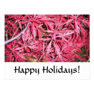 Japanese Maple, Red Postcard