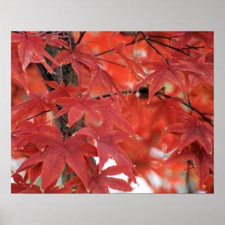 Japanese Maple Tree Fall Foliage Poster