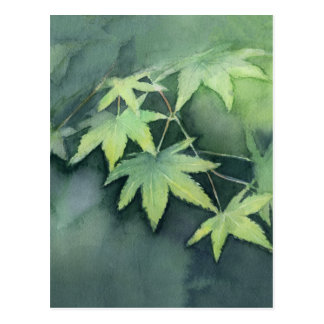 Japanese Maple Watercolor Postcard