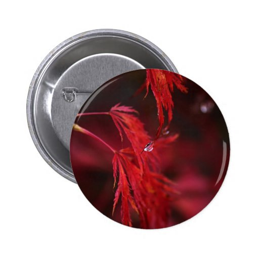 Japanese Maple with Raindrop Pins
