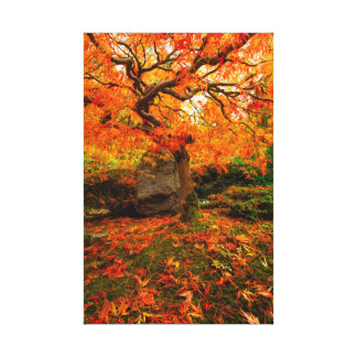Japanese Maple with Stunning Fall Foliage Stretched Canvas Prints