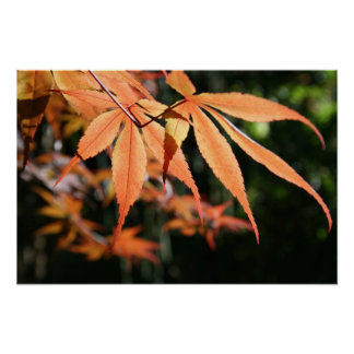 Japanese Maples (7) Floral Photography Poster
