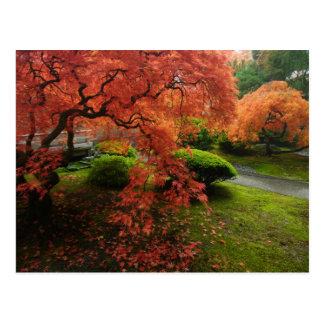 Japanese Maples in a Japanese Garden in Autumn Postcard