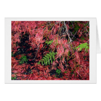 Japanese Maples Leaves carpet the soil Greeting Card
