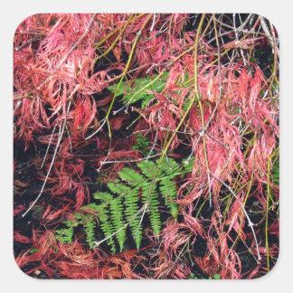 Japanese Maples Leaves carpet the soil Square Sticker