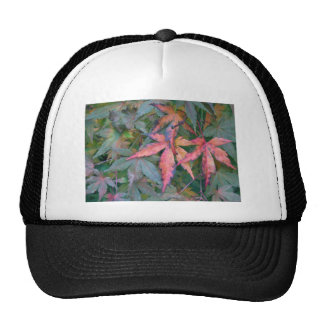 Japanese Maples Leaves in Fall - Photograph Hat