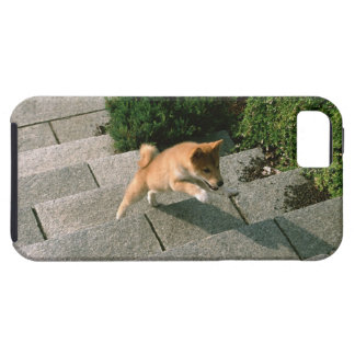 Japanese Midget Shiba 3 iPhone 5 Case